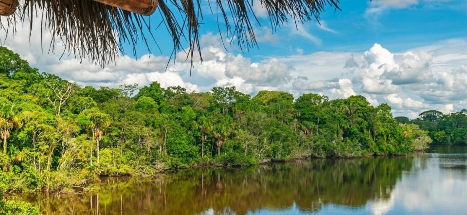[AMAZÔNIA]